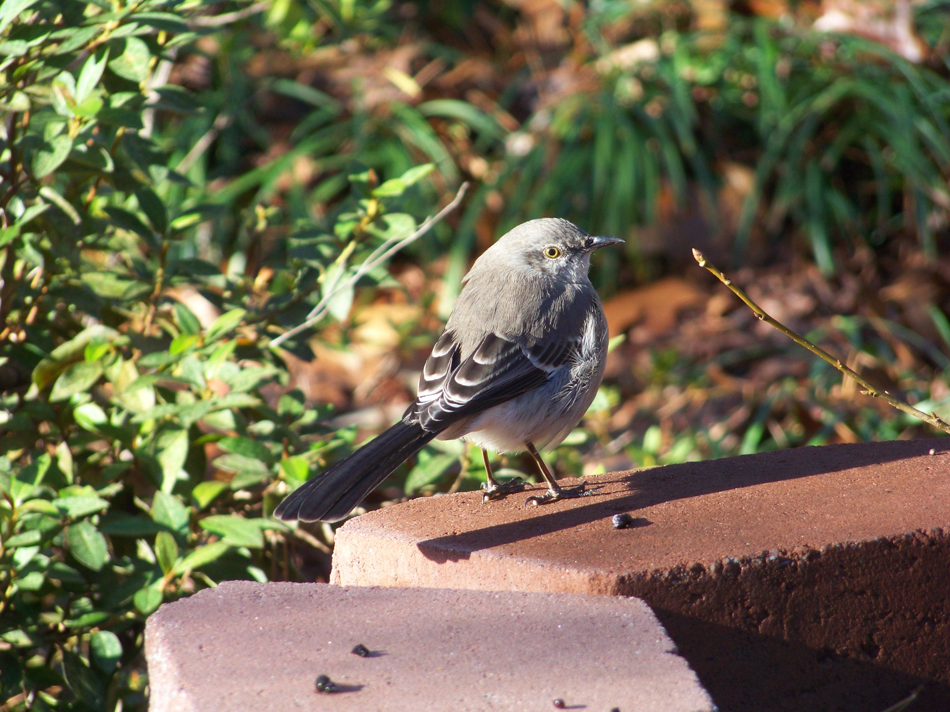check out this really fat bird! | Maria Morera Johnson